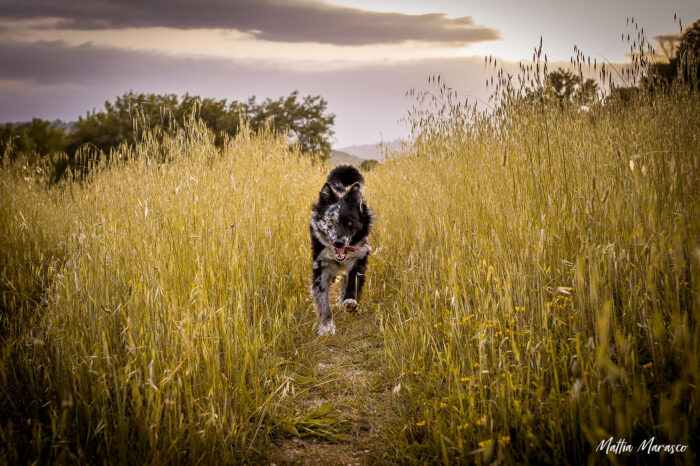 mattia-marasco-dogphotographer-allrightsreserved-6368