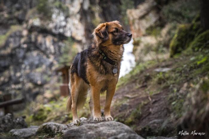 mattia-marasco-dogphotographer-allrightsreserved-8618